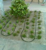 druppelslang-aanleggen-in-binnentuin